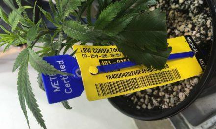 Metrc awarded Oklahoma's medical marijuana traceability contract