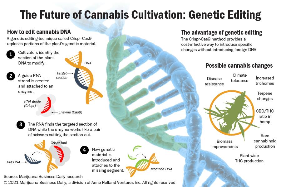 Genetic editing offers marijuana and hemp companies a way to improve plant strains